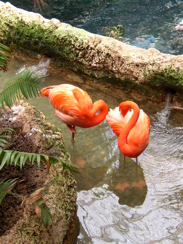 Flamingos in a creek.
