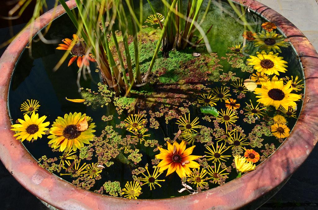 在韦恩的Chanticleer的浮动仙境。照片由Simon.