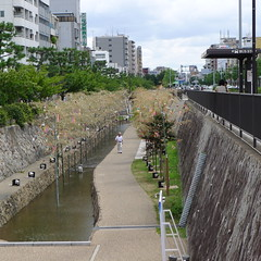 Horikawa Canal Kyoto