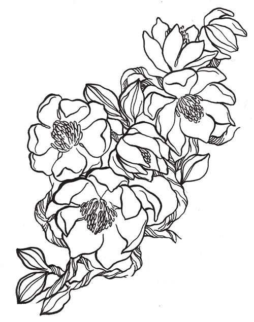 lindsaynohl_101florals_magnolia_icon_sm