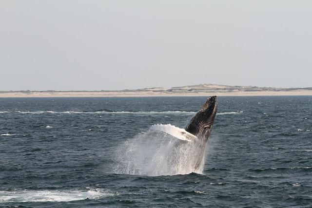 Whale Watch Photos - Captain John - Plymouth