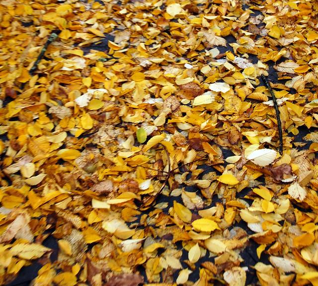 298. Fall Carpet