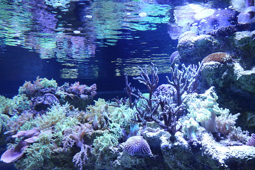 sumida_aquarium8