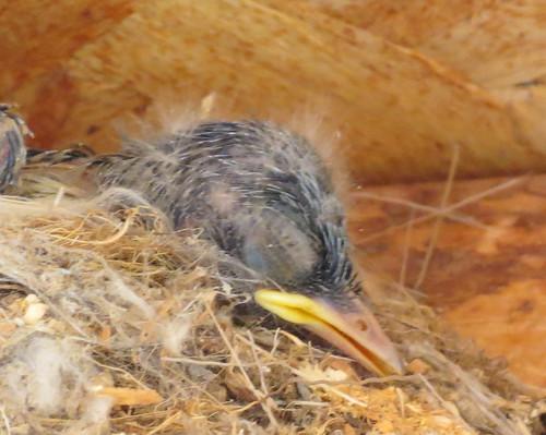CC sleeping bird