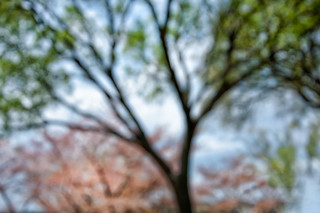 My Rites Of Spring:  Burgeoning Clarity - East Potomac Park, Washington, D.C., - April 14, 2014