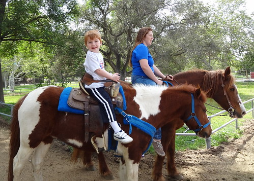 Henry Going for a Pony Trot