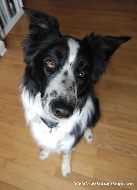 Puppy-faced