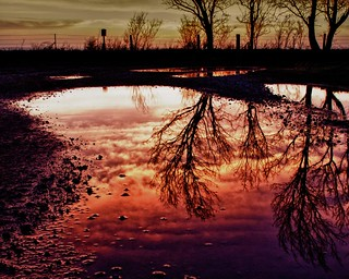 tree reflection at sunset in water puddle