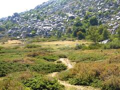Le pacage sous le versant Est du Castellu d'Urnucciu