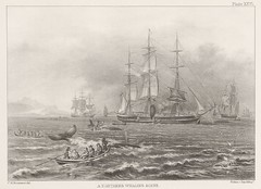 sailing ship, schooner, vehicle, ship, full-rigged ship, mast, drawing, tall ship, watercraft,