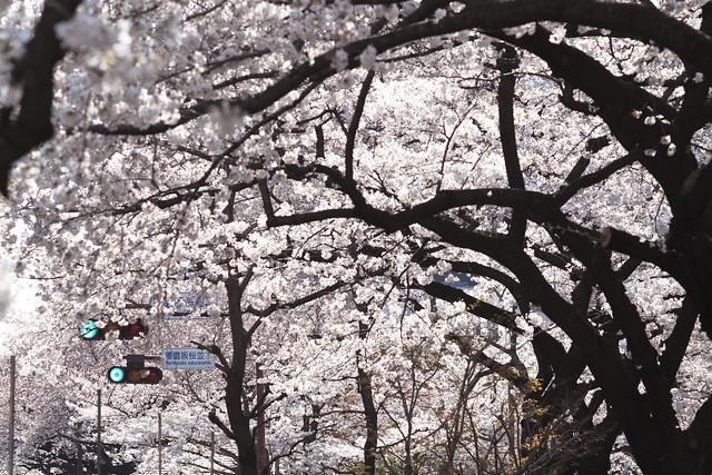 花天井の並木道