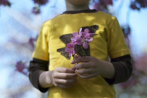 """Pink flower tree"""