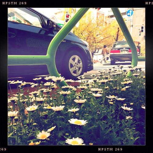 花壇と車 #hipstamatic