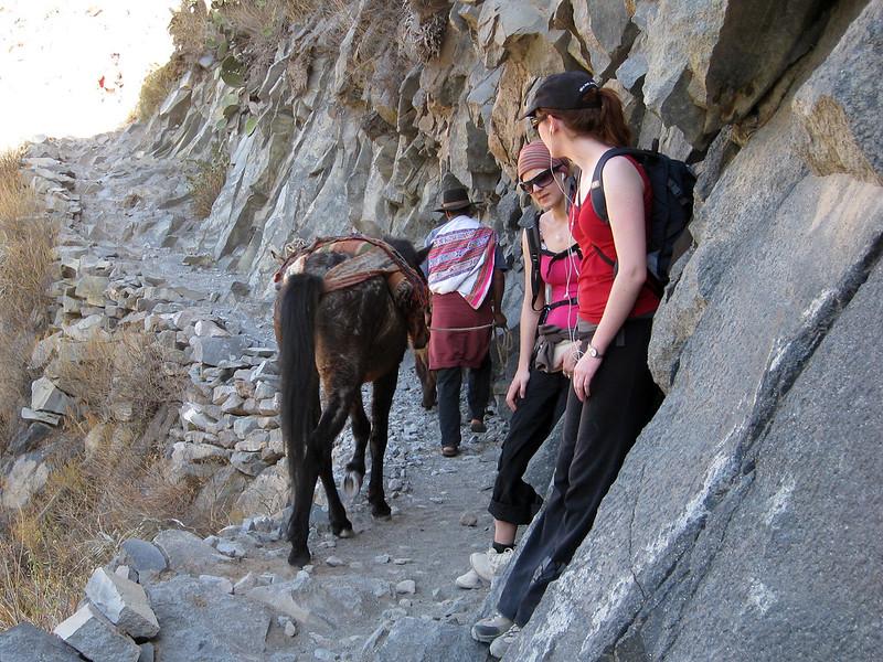 Beware of donkeys! - Colca Canyon - Peru
