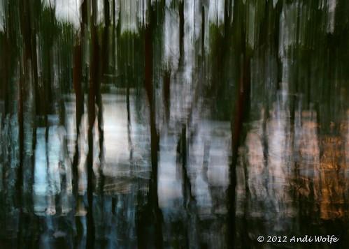 Mangrove ICM by andiwolfe