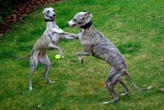 D6692  Bella & Gracie