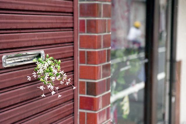 シャッターの小花