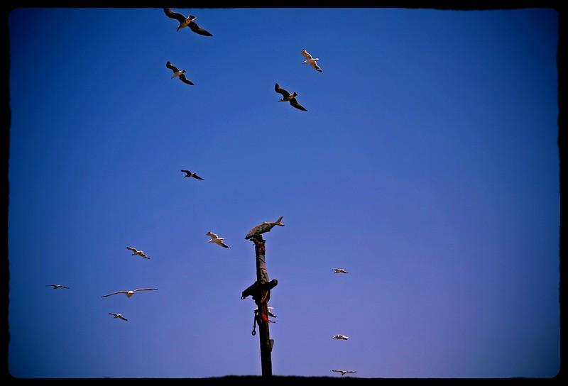 essaouira birds