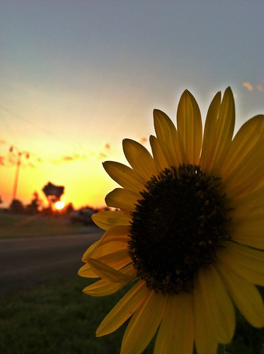 sun sunrise route66 sunflower mobileuploads iphoneography