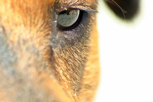 Pallo Eye