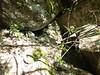Sur la sente des chasseurs : un abri après le 2ème ruisseau