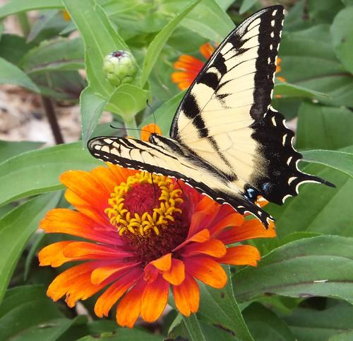 Flower&Butterfly2