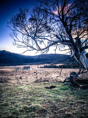 longexposure tree clouds sunrise gum australia homestead gumtree canoneos act orroral australiancapitalterritory 50d namadginationalpark brokencloud orroralhomestead sigma1750mmf28exdcos