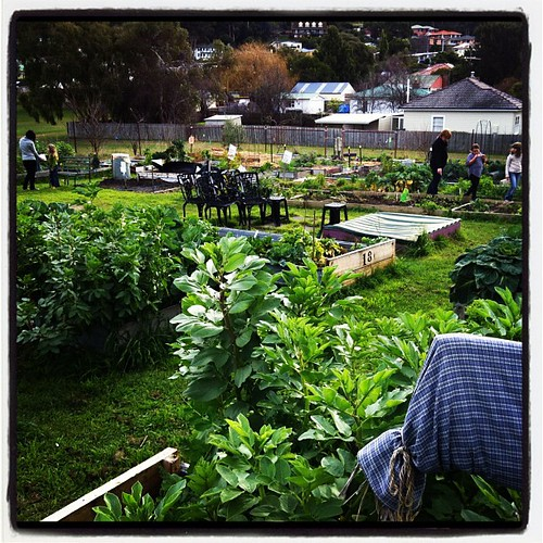 Wandering through the community garden at co-op #unschooling