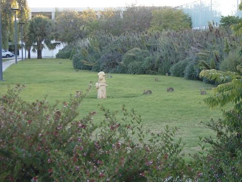 Bunnies on Campus