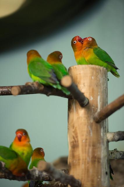 Takashi Ueno - Birds On The Wires