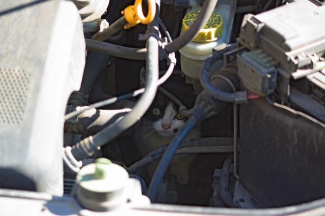 Chatons mécaniciens dans le moteur d'une Polo