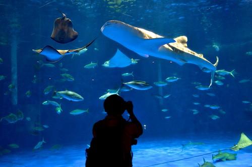 2012夏日大作戰 - 鹿児島 - かごしま水族館 (7)