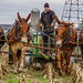 Small photo of Amish Country Farmer
