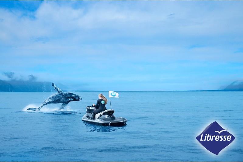 WWYW_whale