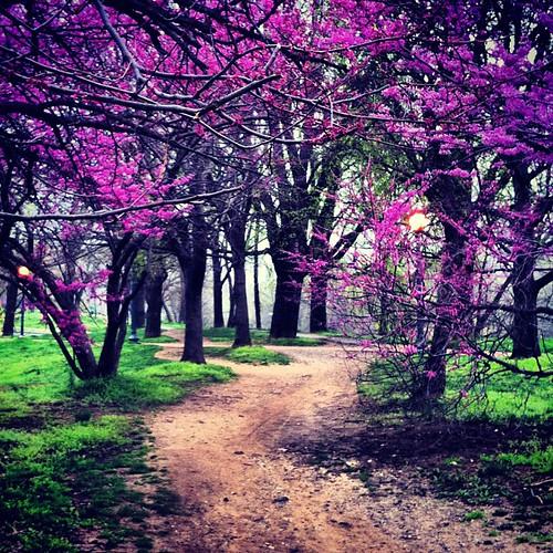 Rose Park in spring