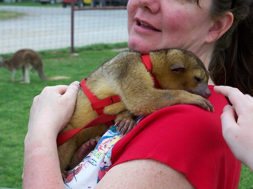 Me, you, and a Kinkajou too!
