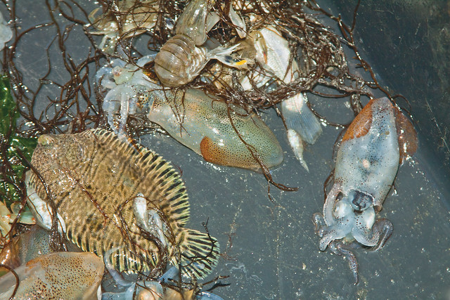 While trawling for flounder many different types of fish for Types of fishing nets