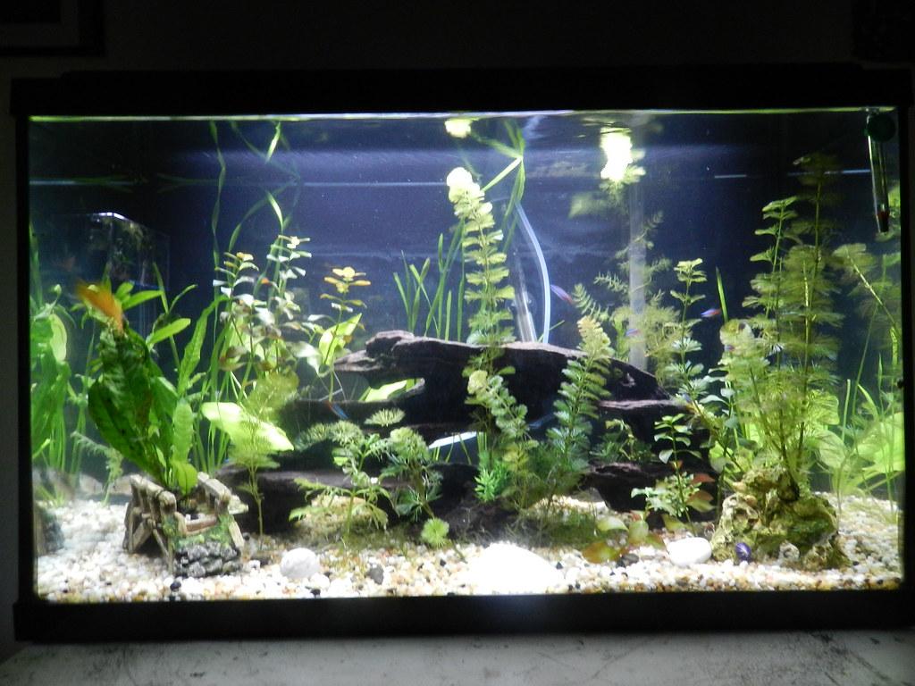 Small fish tank maintenance 5g aquatop zen nano glass for Zen fish tank
