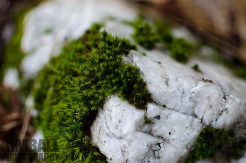 Mossy Quartz