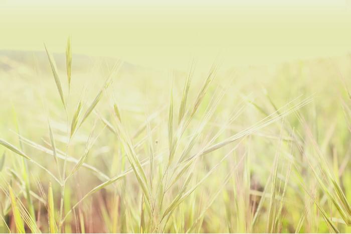 {field} grass