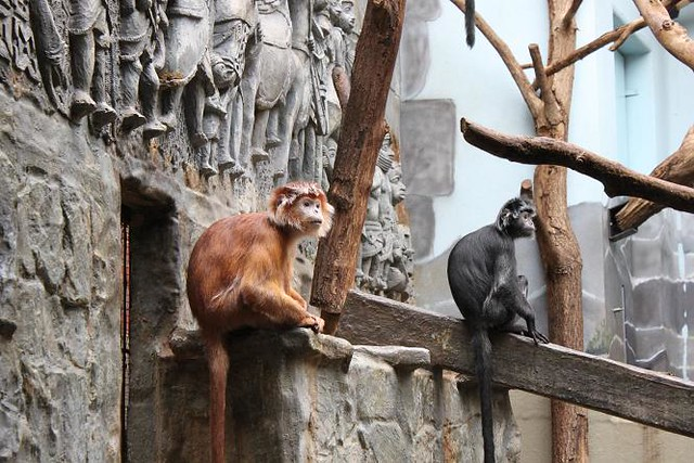 monkeys at Antwerp Zoo