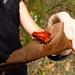 Chris saying hello to a poisonous strawberry dart frog.  Botanic Gardens in Puerto Viejo, Costa Rica 29APR12