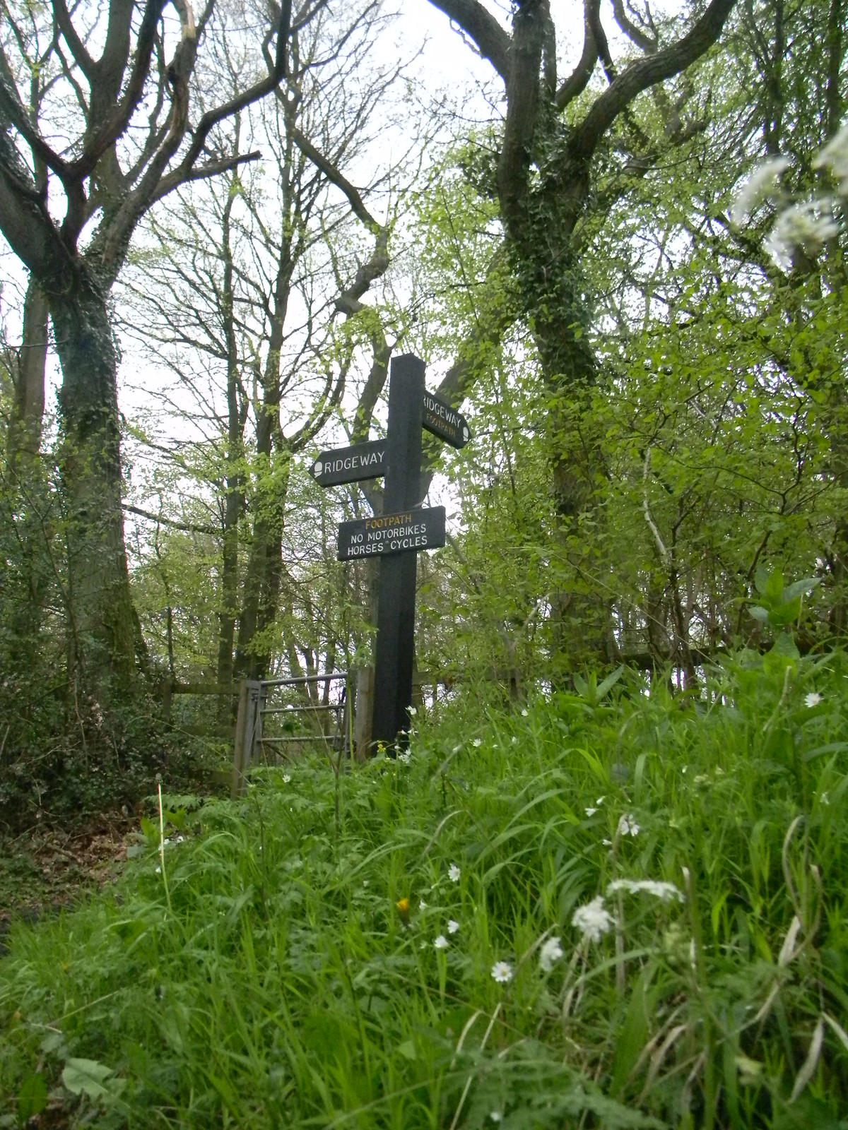 Ridgeway sign with stitchwort Wendover Circular via Lee