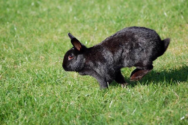 kaninchen frei halten im garten seite 2 kaninchen. Black Bedroom Furniture Sets. Home Design Ideas