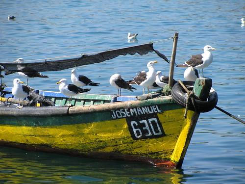 Gaviotas a bordo