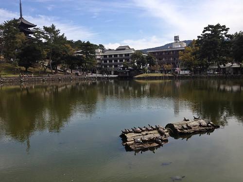 Sarusawa-Ike Pond