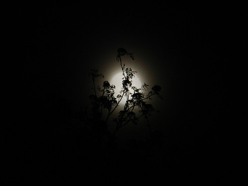 Hazy supermoon behind branches