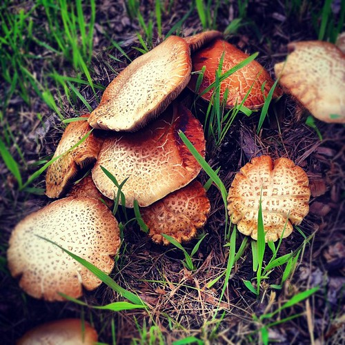 mushrooms on the path #mushrooms #bikeride