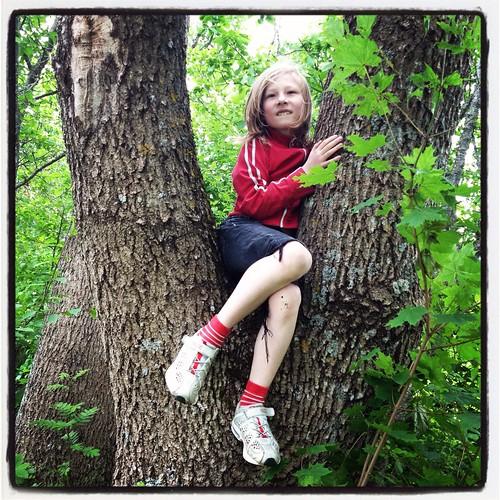 Viggo i mitt gamla klätterträd, den väldiga asken nere vid grinden