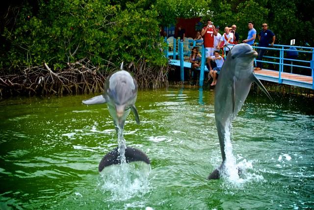 anteketborka.blogspot.com, dauphins4